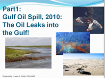 Part 1: The Oil Leaks into the Gulf!